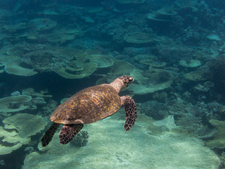 Sea turtle swimming in the water