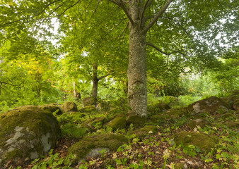 Forest in Åholmen, Västmanland, Sweden