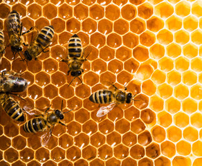 Top view of the working bees on honeycells.