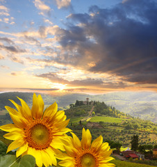 Fototapete - Chianti vineyard with sunflowers in Tuscany, Italy