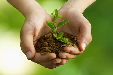 árbol en las manos