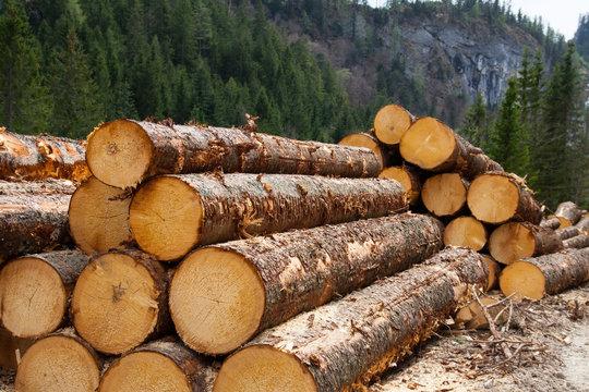 timber logging in Austrian Alps