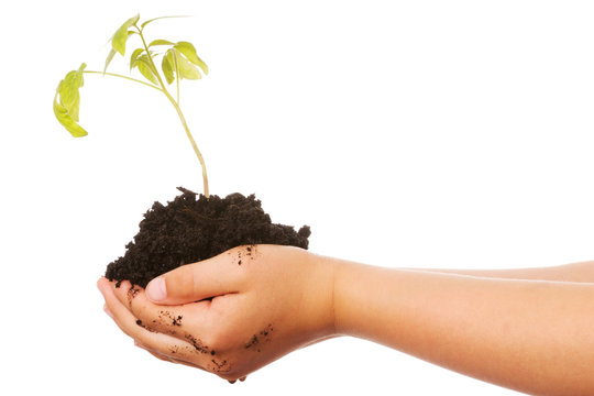 Pflanze in der Hand