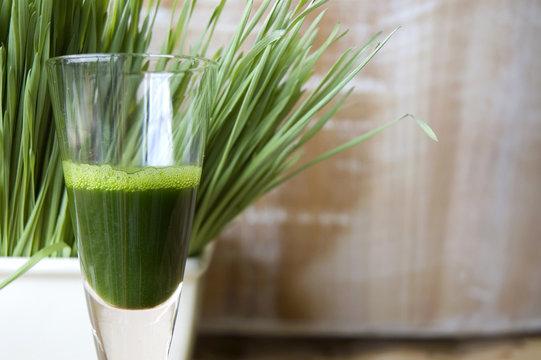 close up glass of wheatgrass