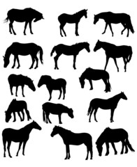 fifteen horses isolated on white