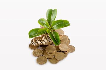 Money under trees or plant
