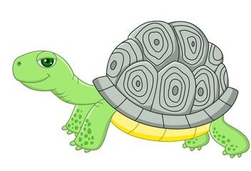 tortouse cartoon