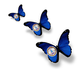 Three Virginia flag butterflies, isolated on white