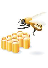 сота мед пчелы