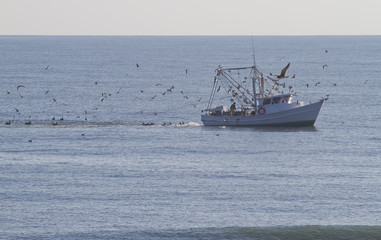Fishing Trawler and Excited Birds