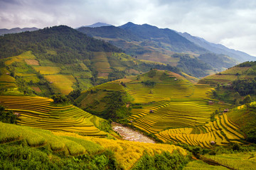 Canvas Prints Honey Rice Terraces
