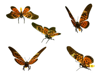 Butterflies, isolated on white background