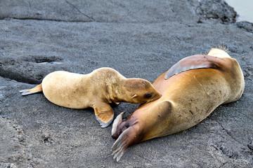 Galapagos Sea Lion & Her Pup