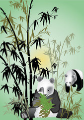panda in bamboo illustration