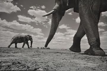 Namibia Elefant SW
