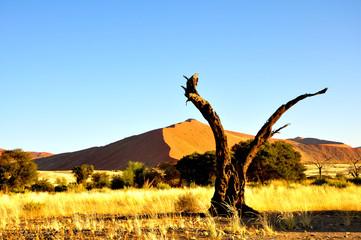 Sossusvlei Baum und Düne