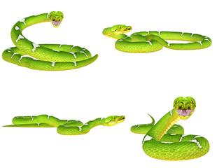 Green Tree Python Pack