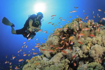 Scuba Diver explores a coral reef