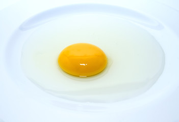 egg yolk in the plate
