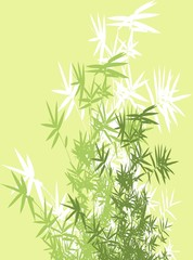 bamboo branches background