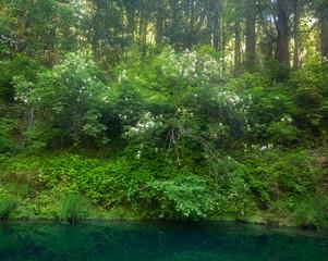 Lush Idyllic Forest in Spring