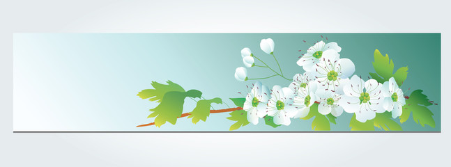 Flower vector background .