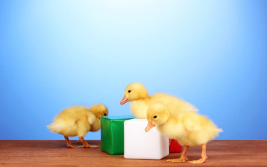 Duckling and cubes on wooden table on blue background