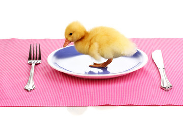 Duckling and table setting isolated on white