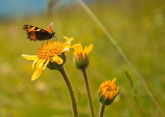 Butterfly on a flower in the sun