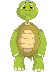 Sad Turtle.
