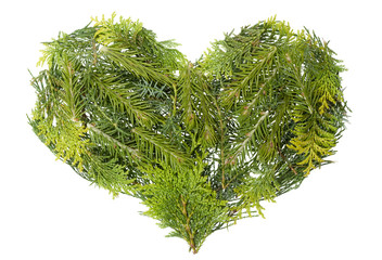 Evergreen  coniferous christmas trees heart isolated