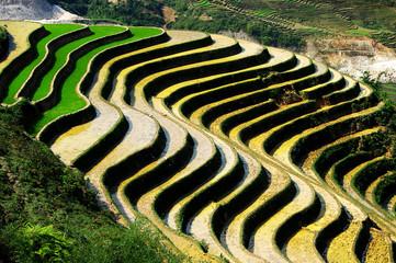 rizière en escalier
