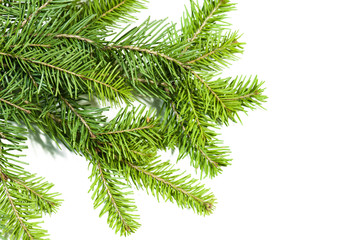 Close up view of the Christmas tree