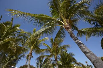Palms with blue sky