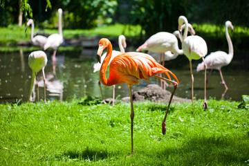 flamingo in dierentuin