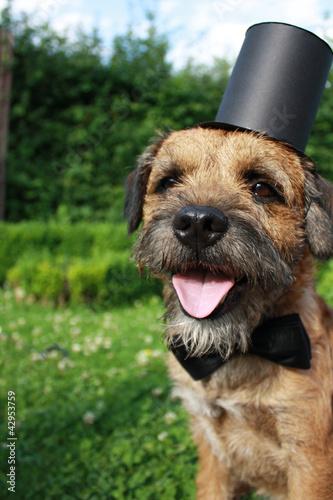 Beautiful Terrier Bow Adorable Dog - 500_F_42953759_da43sRYsLxPDR1ZIlp3q2DA6IIwN9tsc  Best Photo Reference_77574  .jpg