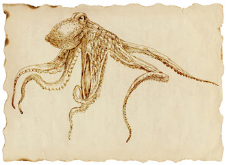 Drawing (uncompromising) octopus on the old paper