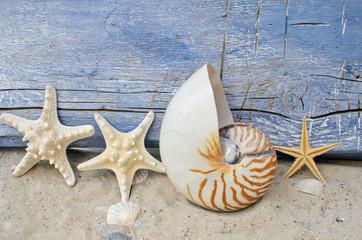 Urlaubserinnerung mit Seesternen und Nautilus