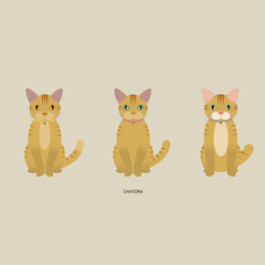 3 red tabby