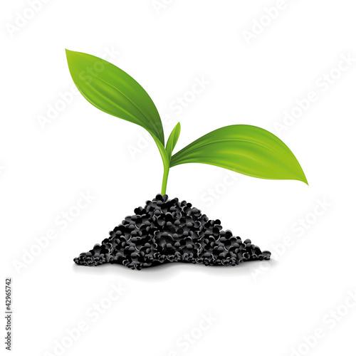 Plante Avec Amas De Terre Stock Photo And Royalty Free
