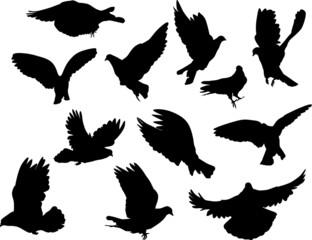 twelve pigeon silhouettes