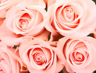 Roses background , on vintage style