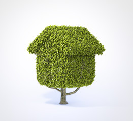 House shaped tree