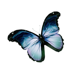 Grunge blue butterfly flying, isolated on white