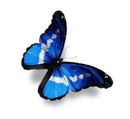 Dark blue butterfly morpho, isolated on white