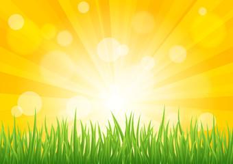 Bright vector sun effect with green grass field