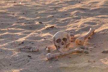 Skull and bones in morning desert
