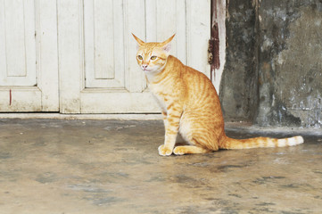 horizontal shot of cute red cat