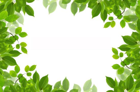 green fresh leaves frame
