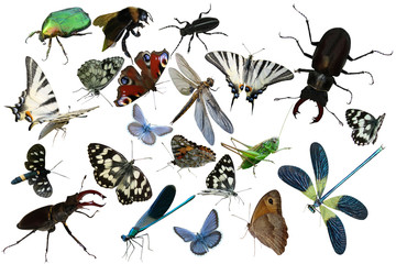 Butterflies, dragonfly, a grasshopper, other insects isolated